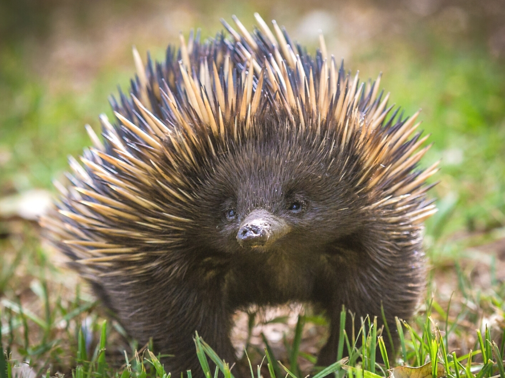 Educational studying abroad The Echidna Queensland Australia